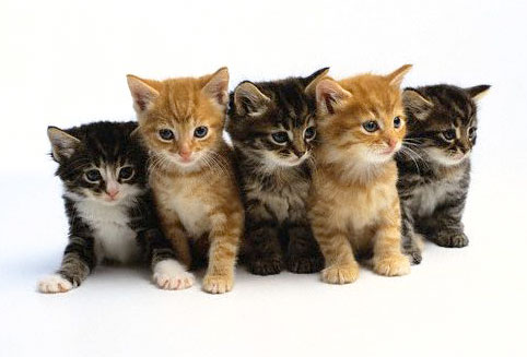 These kittens mean nothing. They are a metaphorical representation of perceived effort. Deep.